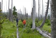 2010-08 Fieldwork Bavarian Forest