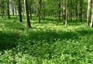 2013-06 Forest plots - Středohoří