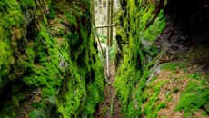 Narrow sandstone ravine