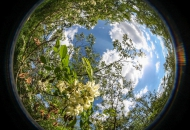 Hemispherical photographs