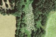 Giant hogweed from UAV